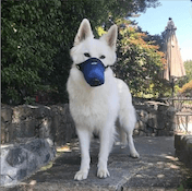 Dog air pollution mask