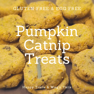 Homemade Pumpkin Catnip Treats - DIYHairball Treats